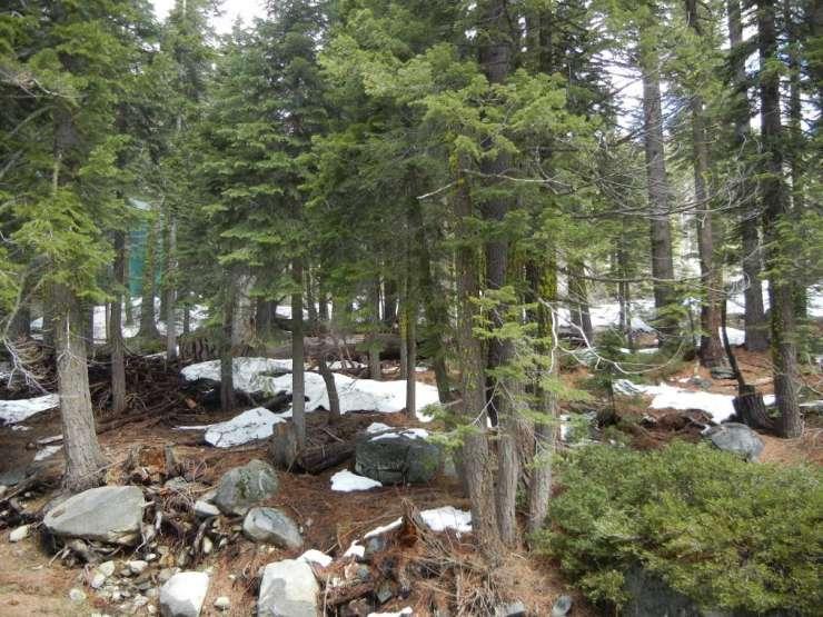 51311 Jeffery Pine, PlaVada