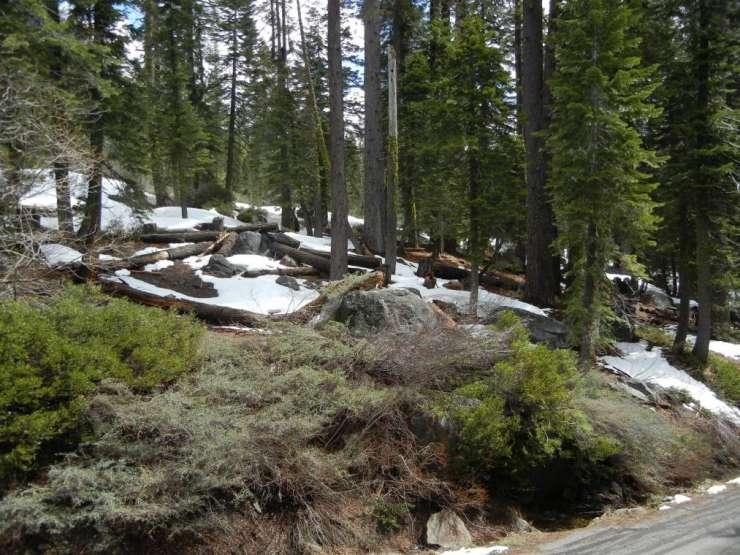 51323 Jeffery Pine, PlaVada